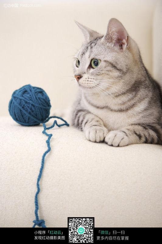 小猫与毛线球