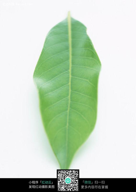 绿色蕨类植物树叶 蕨类植物树叶特写 树叶造型背景是动物的园 梧桐