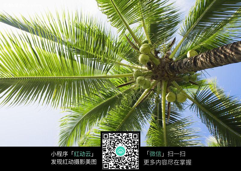 椰子树图片_女性女人图片