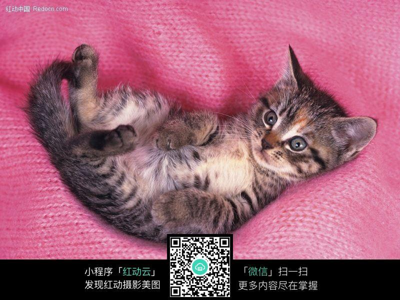 可爱的猫咪099图片_陆地动物图片