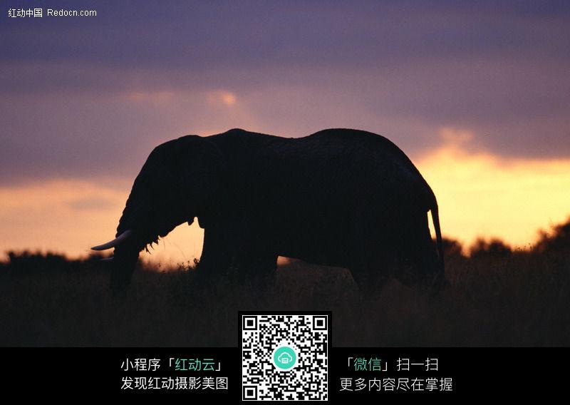 大象021_陆地动物图片