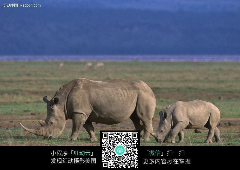 犀牛62图片_陆地动物图片