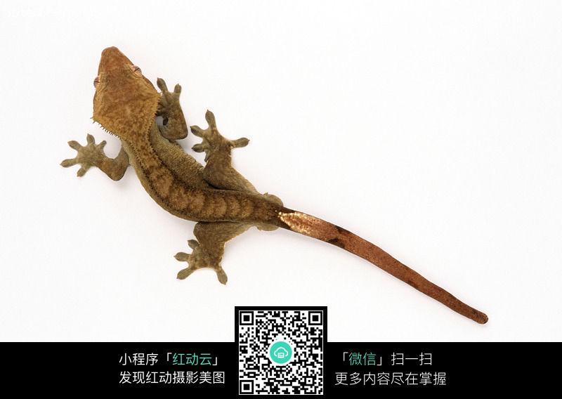 蜥蜴114图片_陆地动物图片