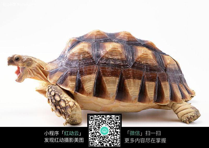 龟196图片_陆地动物图片