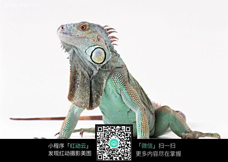 变色龙147_陆地动物图片