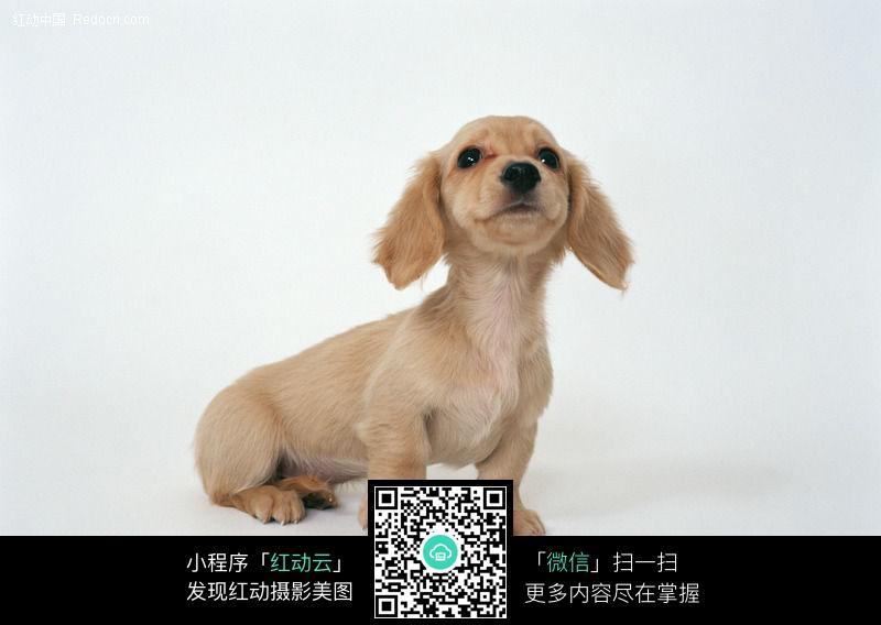 狗21图片_陆地动物图片