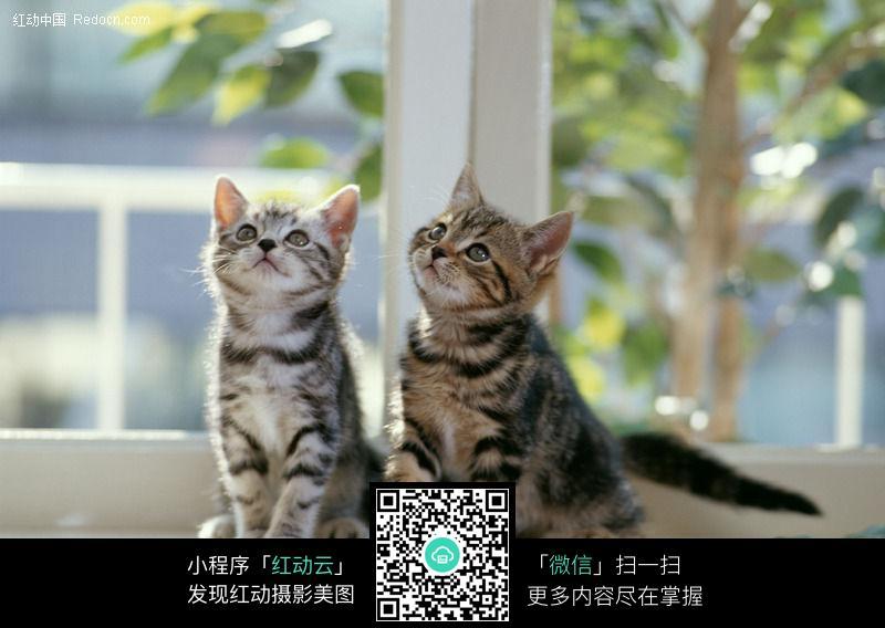 壁纸 动物 猫 猫咪 小猫 桌面 800_568
