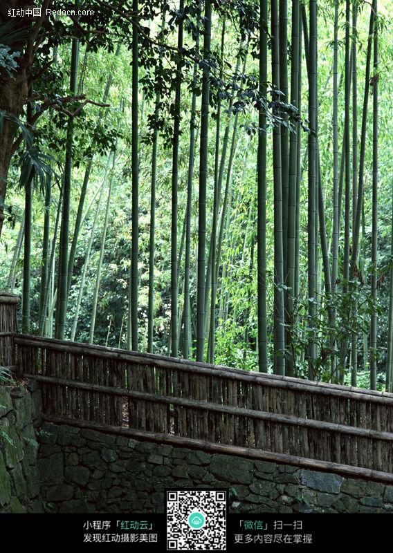 竹林图片_园林景观图片