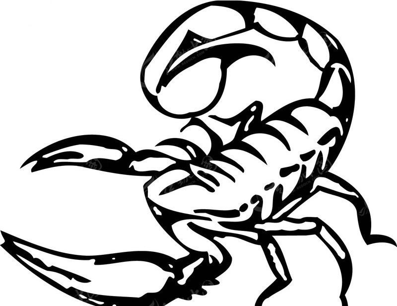 两只蝎子手绘图