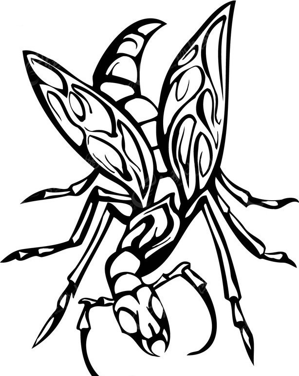 机械昆虫手绘临摹
