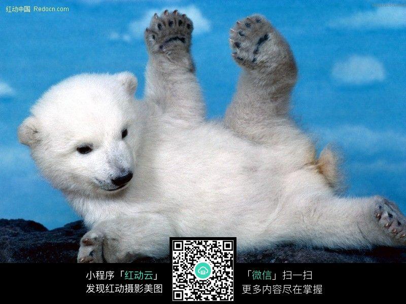 北极熊212图片_陆地动物图片夏天仓鼠笼放尿纱图片
