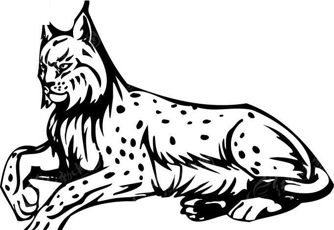 红山猫板m 7 电路图