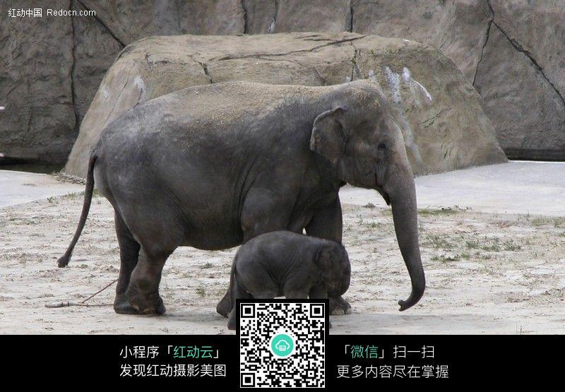 大象_026图片_陆地动物图片