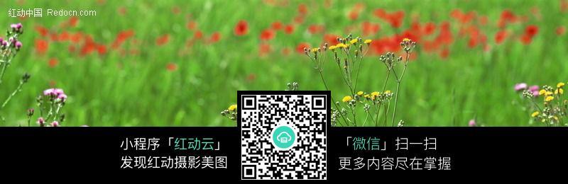 宽幅野花-花丛图片_花草树木图片