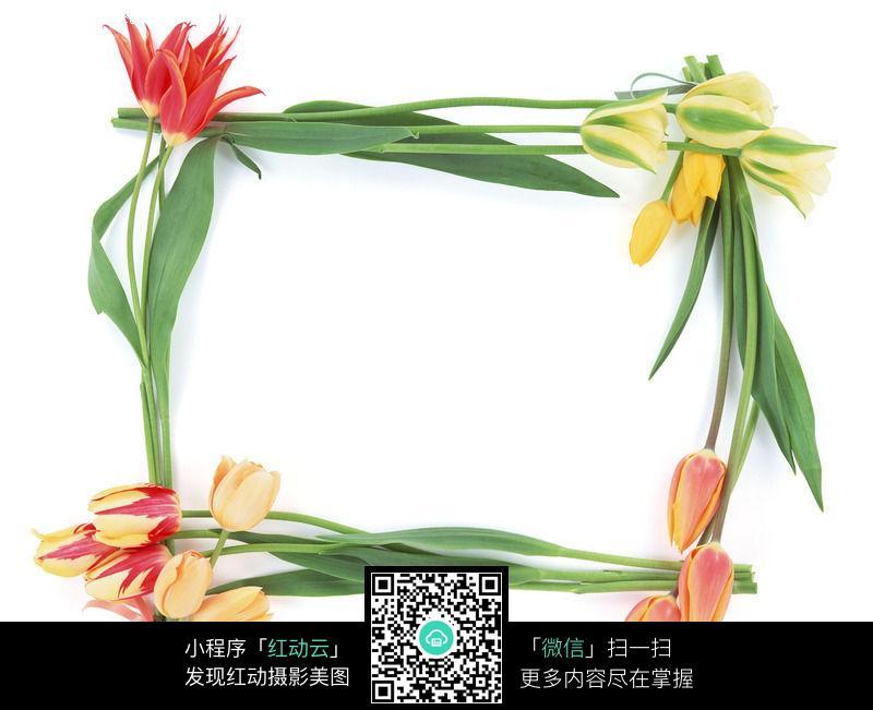 植物花朵边框