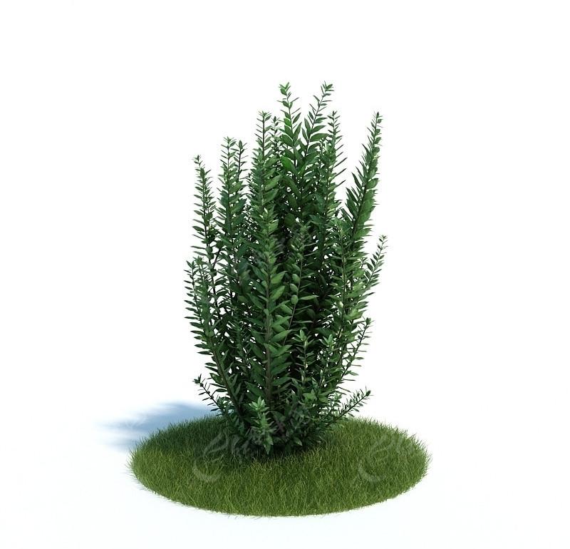 3dmax树模型_动物植物