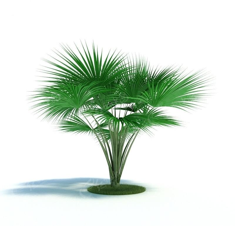 3dmax树 模型 3d模型下载 3d模型素材库下载高清图片