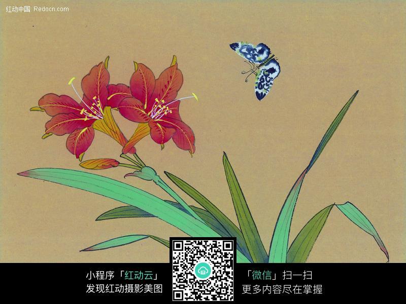 画了蝴蝶与花朵的国画图片