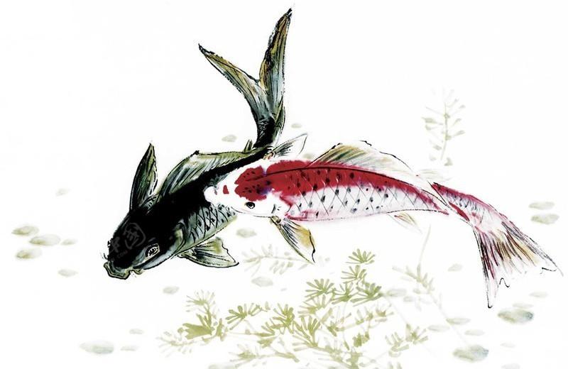 国画作品 水墨绘画 鱼 鲤鱼