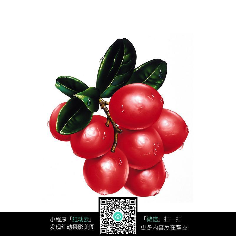 水果 果实 特写 写实 手绘 圣女果  摄影图片