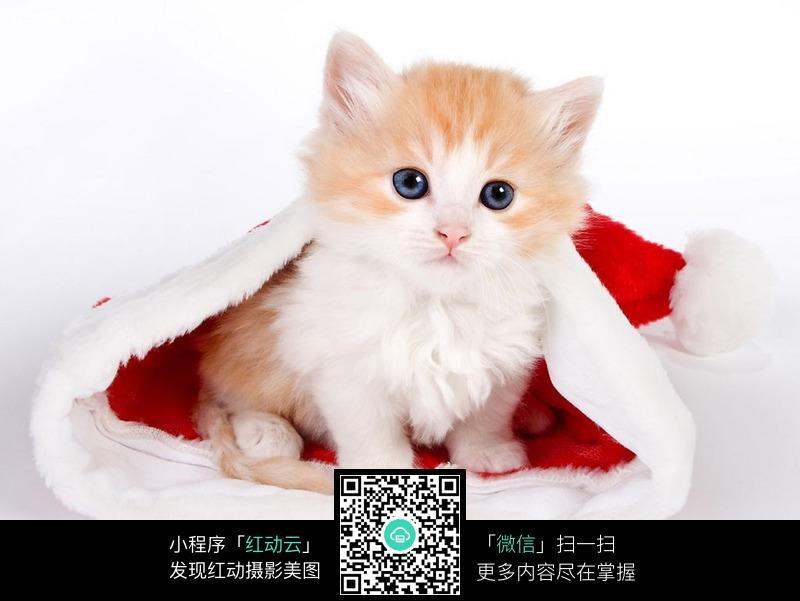 壁纸 动物 猫 猫咪 小猫 桌面 800_601