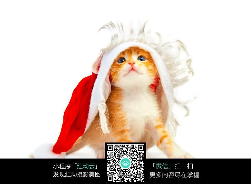 红动网提供陆地动物精美素材免费下载,您当前访问素材主题是小猫带圣诞帽,编号是91002,文件格式JPG,您下载的是一个压缩包文件,请解压后再使用看图软件打开,图片像素是2988*2183像素,素材大小 是1.48 MB,如果您喜欢本作品,请使用上方的分享功能,分享给您的朋友,可以给他们的设计工作带来便利。