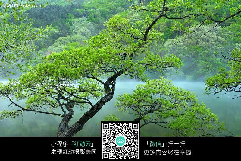 湖面绿树图片_花草树木图片