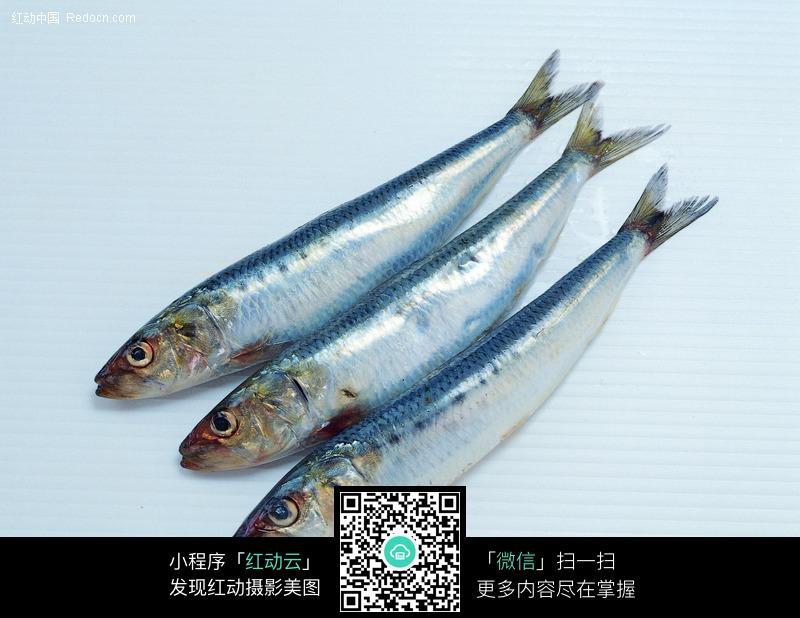 鱼图费载_食材原料图