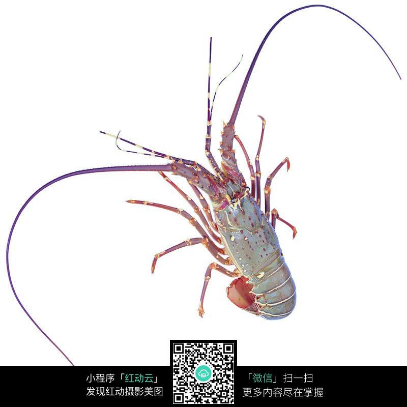 虾_海鲜_食材图片
