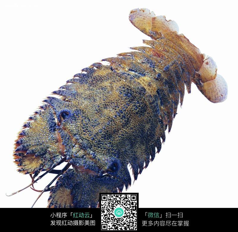 虾_海鲜_食材