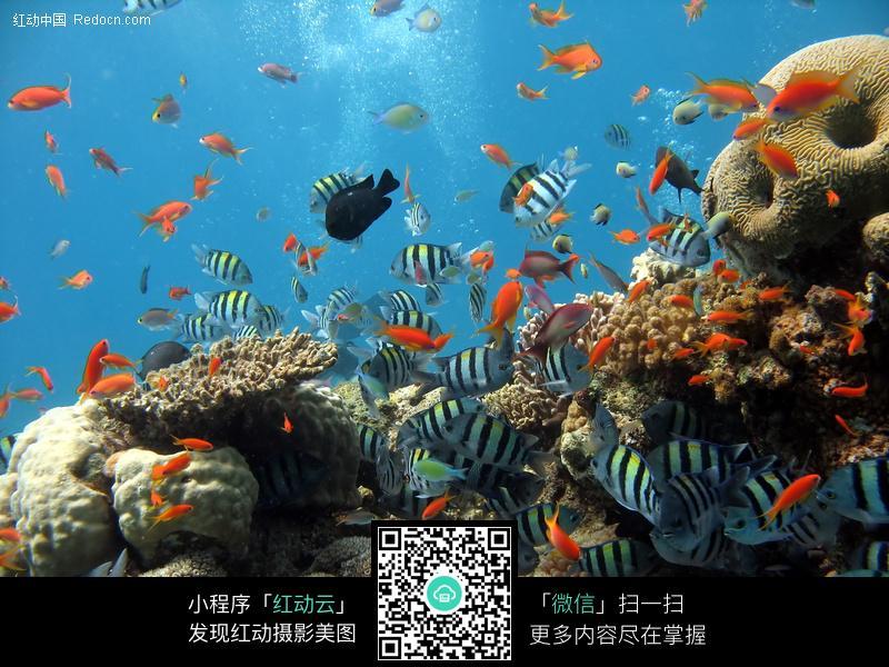 海洋鱼类图片_水中动物图片