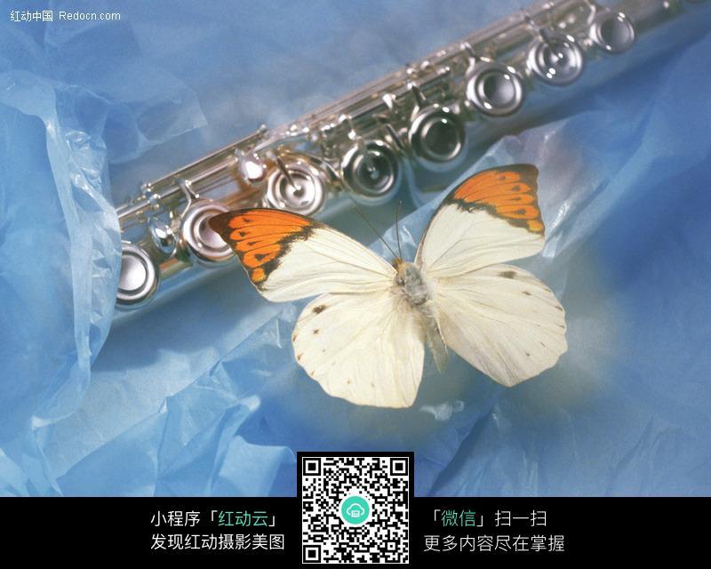 萨克斯管和蝴蝶