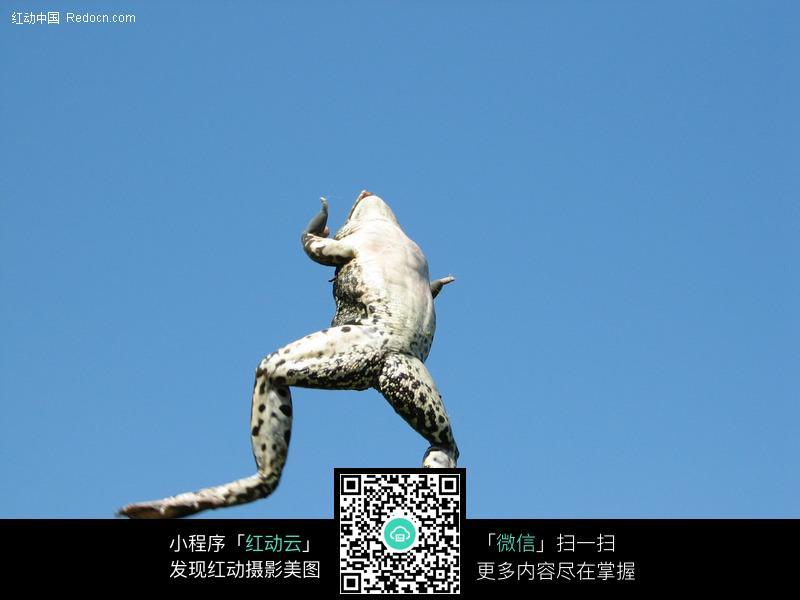 跳跃的青蛙图片 陆地动物图片