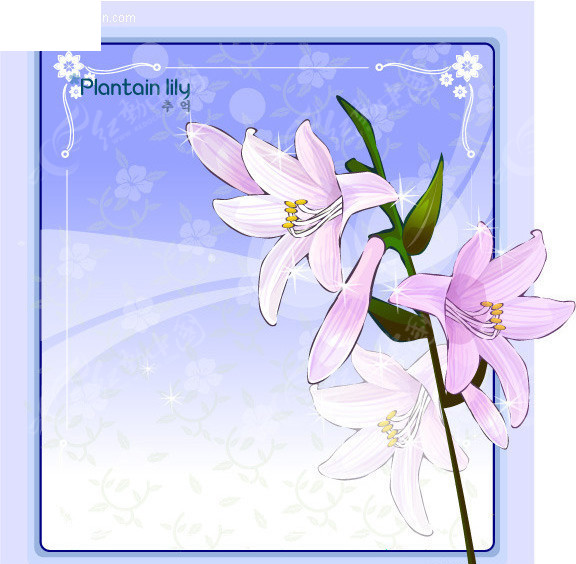 玉簪花-花边边框