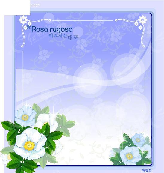 白玫瑰-花边边框
