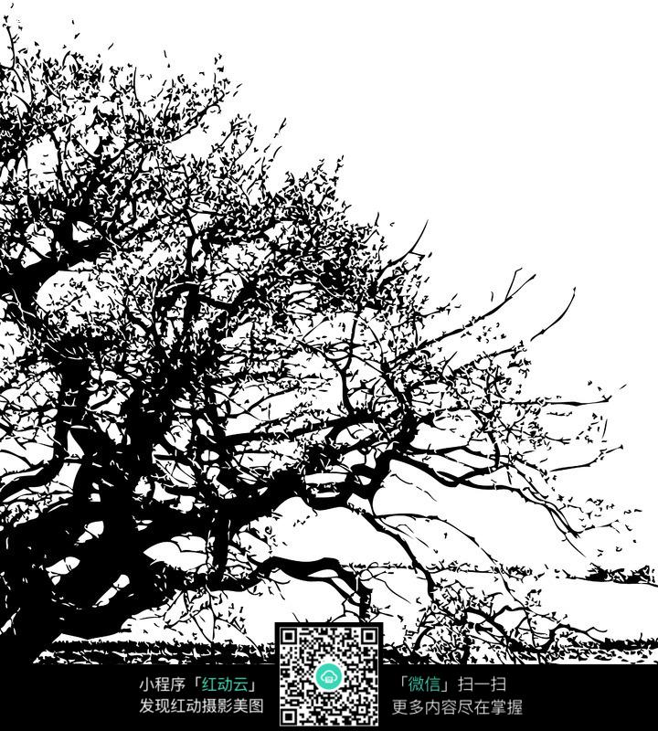 大树卡通图片黑白