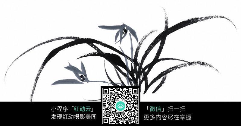 国画兰花_水墨兰花