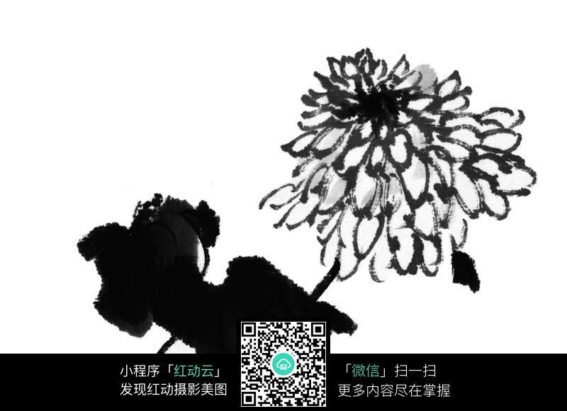 黑白水墨菊花图片