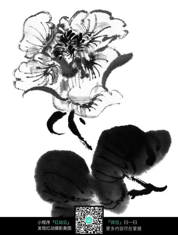 黑白水墨牡丹花