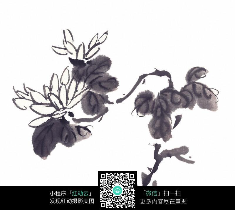 黑白国画水墨菊花图片