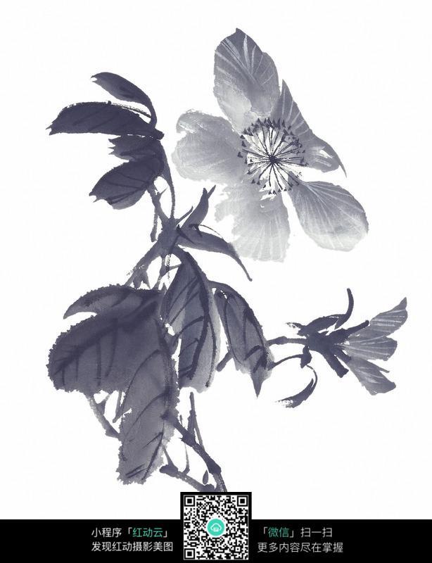 黑白国画水墨兰花图片
