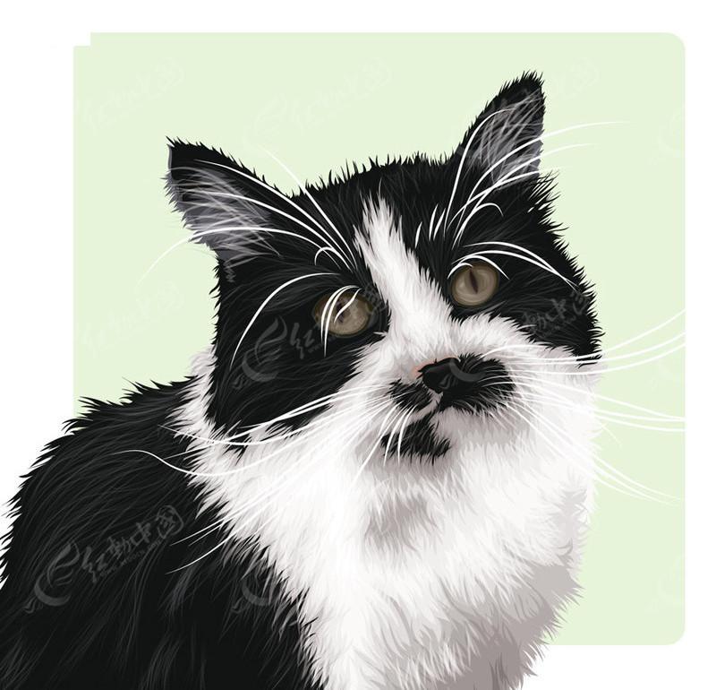 矢量黑白颜色的小猫矢量图ai免费下载_陆地动物素材
