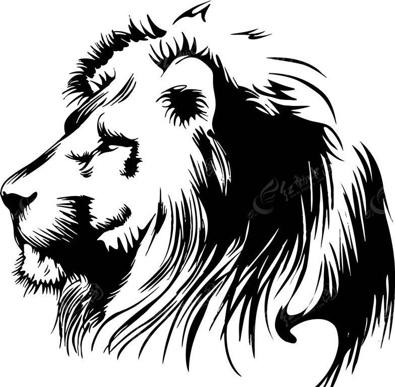 狮子 黑白 野兽 森林之王 矢量 动物 动物图片 矢量素材