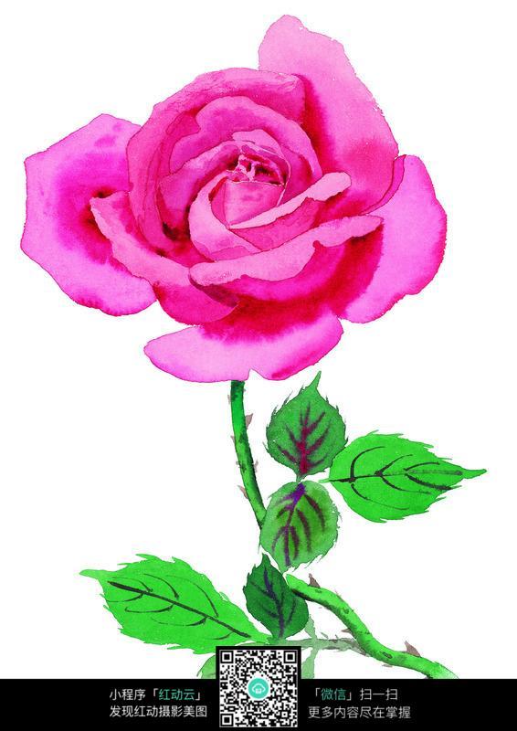 水彩风格粉色玫瑰花高清图片