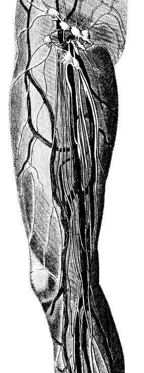 大腿神经分布图_人体神经分布图图片免费下载_红动网