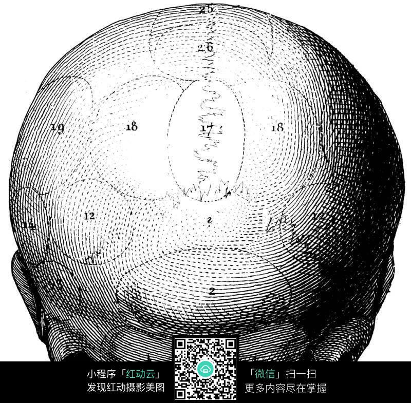 人类头盖骨结构图