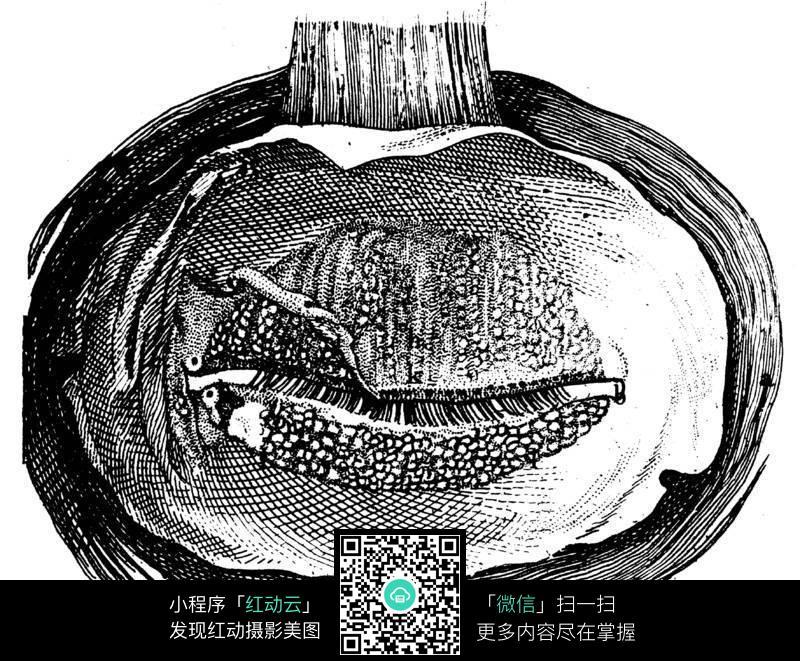 眼球结构图图片