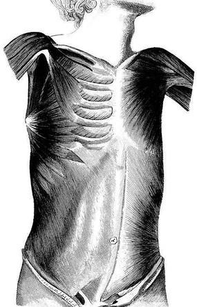 身体肌肉结构分布图