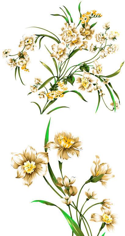 手绘水仙花