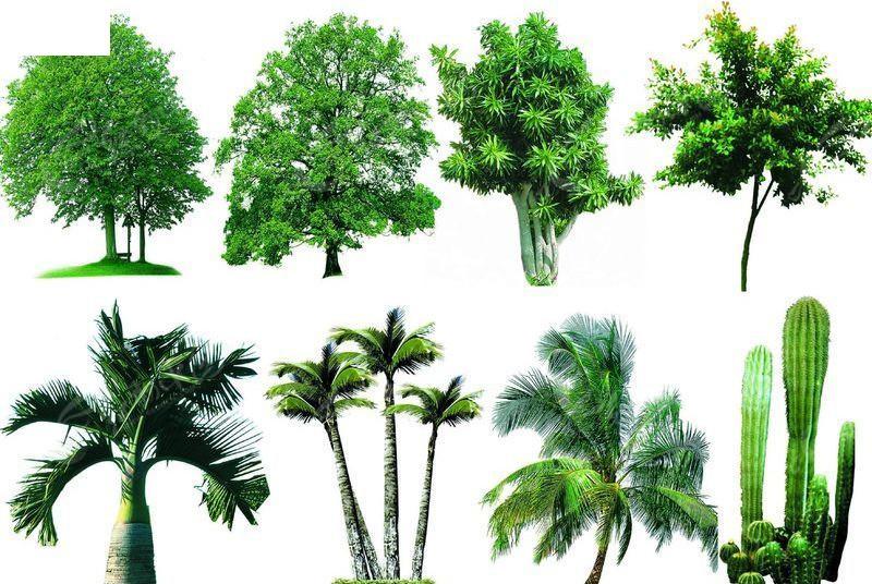 ps树木效果图素材